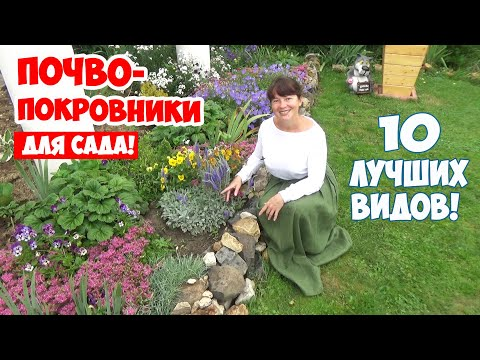 Вопрос: Какие растения посадить в саду для удачи?