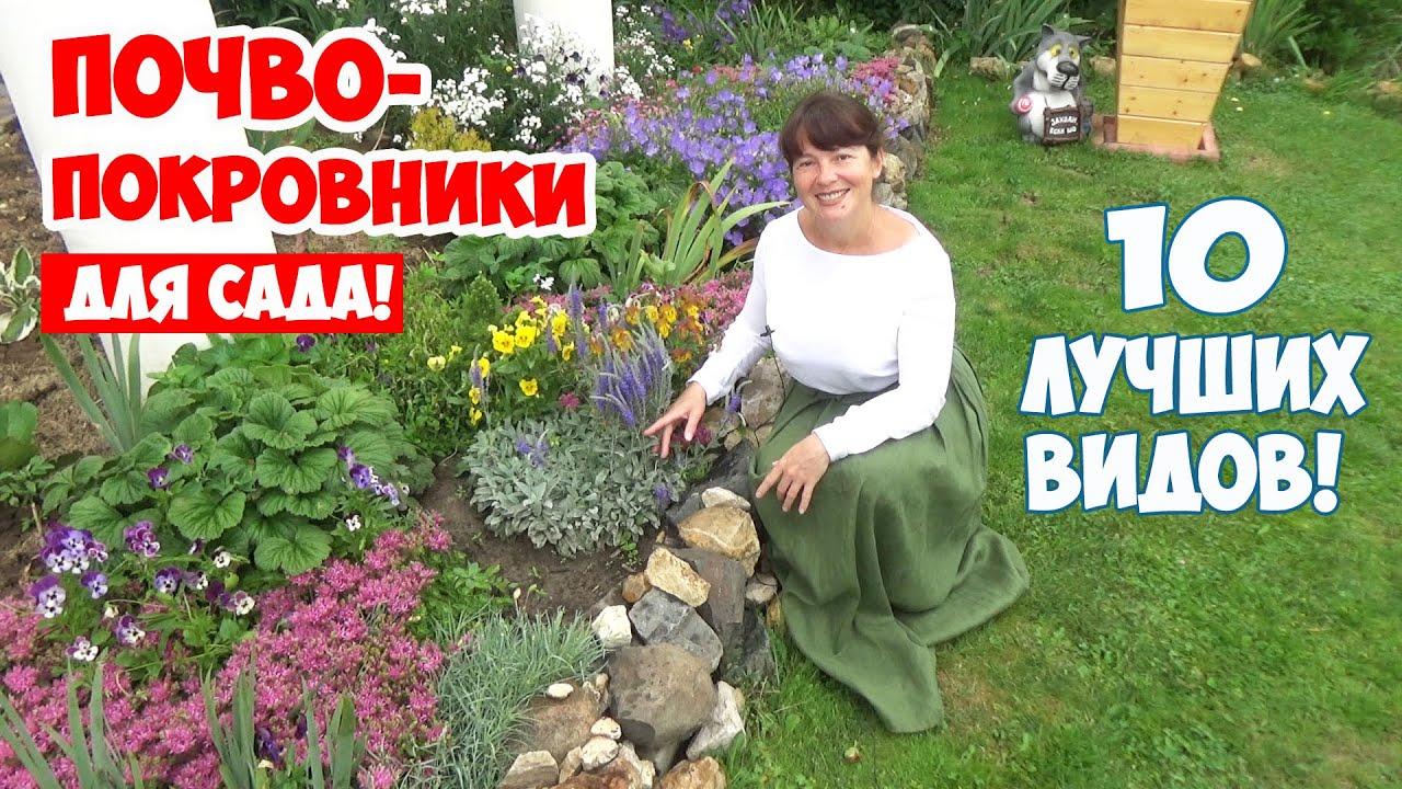 Какие почвопокровные цветы посадить в саду? 10 лучших ПОЧВОПОКРОВНИКОВ, цветущих все лето!