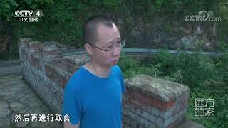 《远方的家》 20200131 大好河山 神奇喀斯特| CCTV中文国际