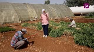 م. أمل القيمري - الخضروات الصيفية