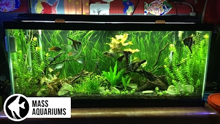 5 AQUARIUM PLANTS for BEGINNERS: Jungle Val, Dwarf Lily, Bacopa, Amazon Sword & Ludwigia Repens