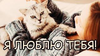 Почему Кошка Спит на Человеке [Получается Кошка Любит Человека больше чем Собака?]