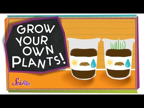 Grow Your Own Plants! - #sciencegoals