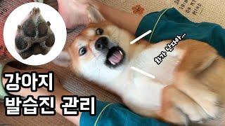 발습진 관리하다가 분노폭발한 강아지 (발핥는 강아지 발…