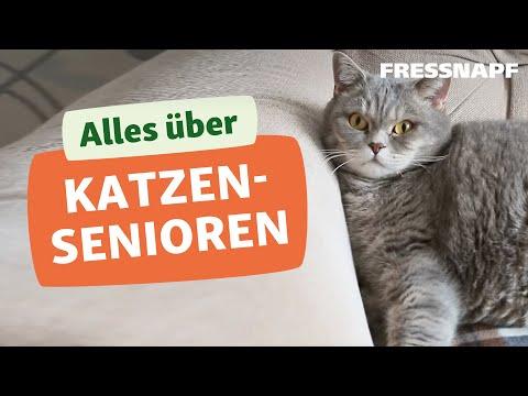 katzenomas wie katzen alt werden und sich ver ndern youtube. Black Bedroom Furniture Sets. Home Design Ideas