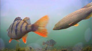 ВЫСОКОЕ ДАВЛЕНИЕ Щука и Окунь на живца Рыбалка на жерлицы Подводная съемка