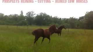Poulains Quarter Horses 2012 et 2013