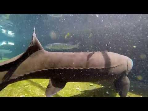 Hagerman Hatchery: A Fish Tour
