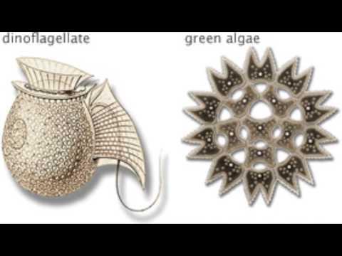 Marine Phytoplankton!
