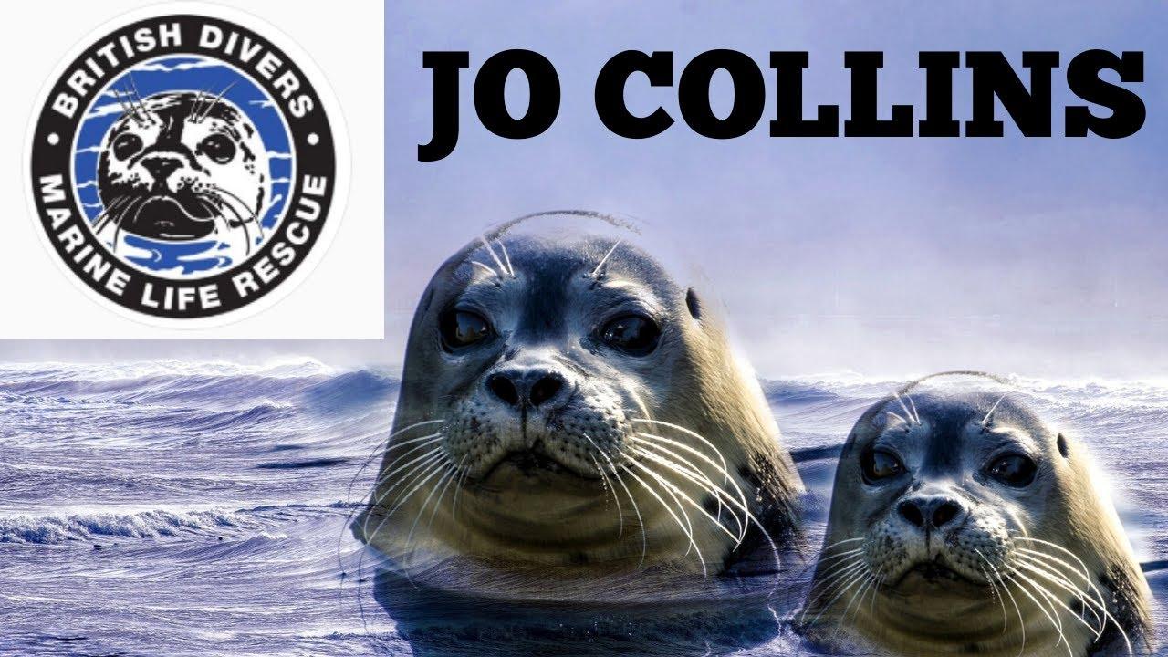 Открытка буклет тюлень спасатель