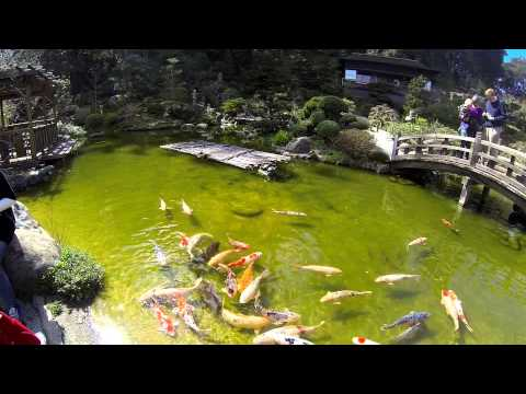 11:11 - HAKONE Japanese Gardens in Saratoga, CA. FDilmed with GoPro Hero3 60fps 1080p