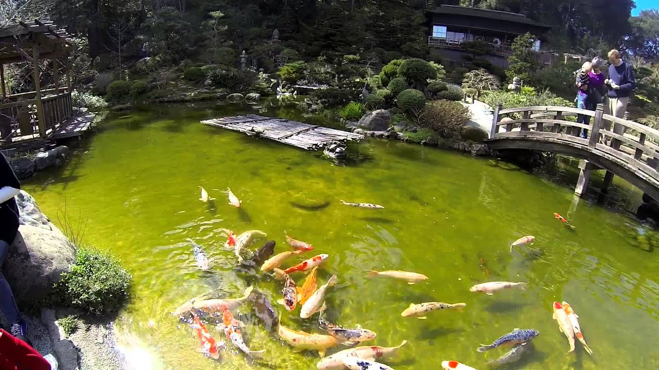 11:11 - HAKONE Japanese Gardens in Saratoga, CA  FDilmed with GoPro Hero3  60fps 1080p