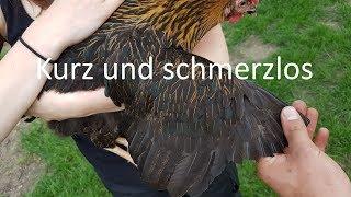 Federn Stutzen bei Hühnern