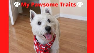 Living With A Westie Pup | West Highland Terrier Characteristics & Traits