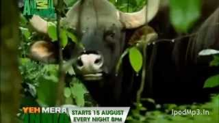 Animal Planet Yeh Mera India Anthem  Shaan (Ipodmp3.In)