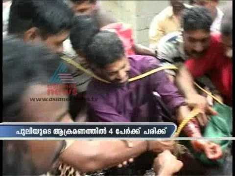 People Catching Wild Leopard In Iravanni,Konni