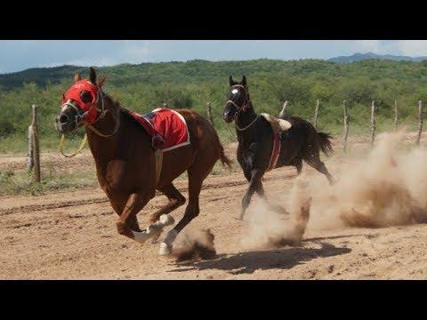 Videos comicos del cola de caballo