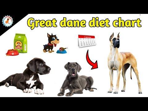 Great Dane Diet Chart / in hindi / Great Dane Diet plan