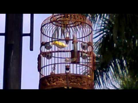 Hoang Khuyen 9999  Thang Long  23.10.2011