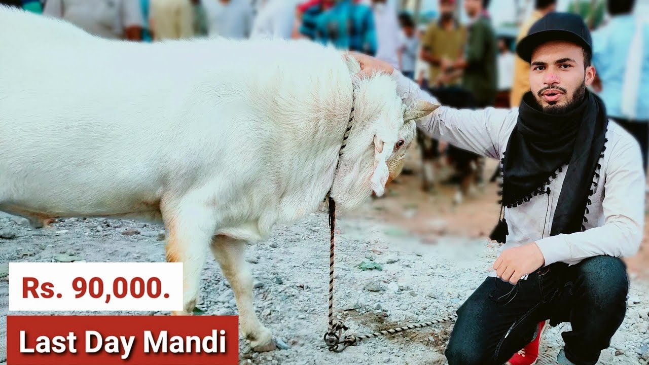Bhopal Bakra Mandi 2020 - AL Aamir Khan