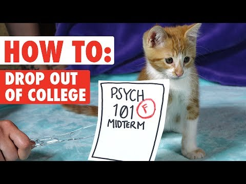 How to Drop Out of College - WITH KITTENS! | Funny Kitten Video 2017