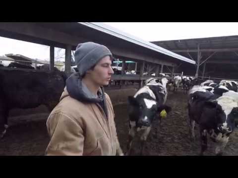 A day on my family dairy farm