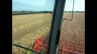 Harvesting Archer Winter Malting Barley in Lincolnshire