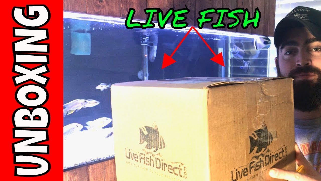 Live Fish Direct Unboxing