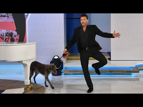 Jerry O'Connell Teaches Harry How To  A Dog