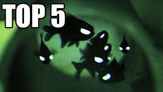 TOP 5 - Ryb s úžasnými schopnostmi