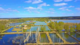 видео Платные пруды для рыбалки волоколамский район