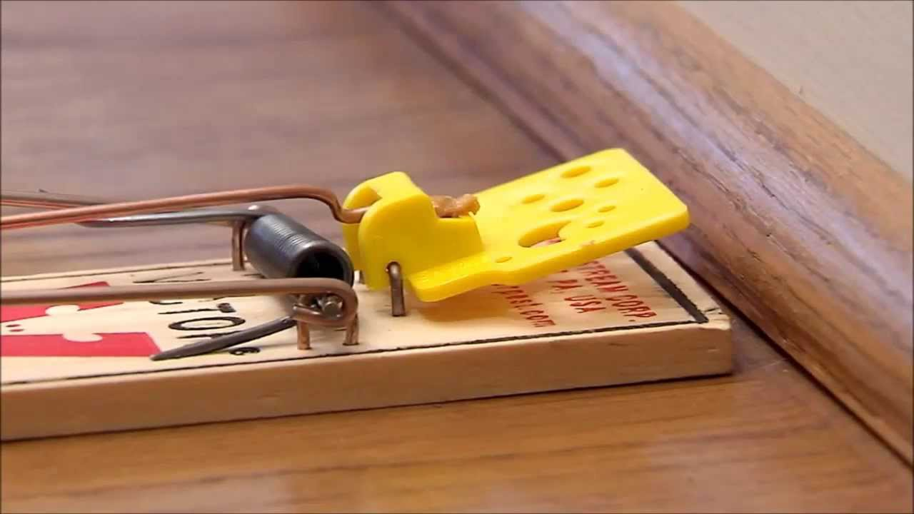 Victor Easy Set Mouse Trap Youtube