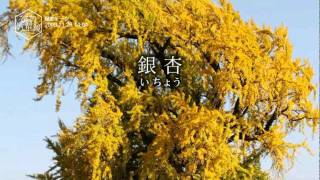 筑豊万華鏡 voi.2【ココモ番組】 MoVist STUDIO CoCoRo Entertainment ...