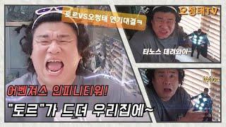 드뎌 토르가 우리집 왔다!! 토르vs오정태 연기대결!! VOS김경록축하^^