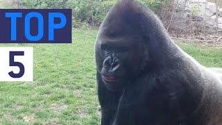Top 5 Animal Attacks Part 2 || JukinVideo Top Five