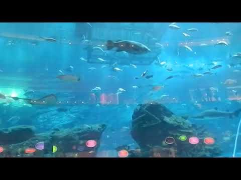 World's Biggest Aquarium at the Biggest Mall of Globe   Dubai