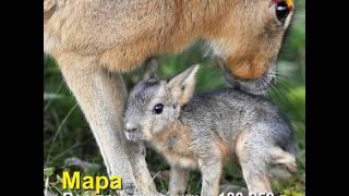 12 животных, которых вы вряд ли видели новорождёнными