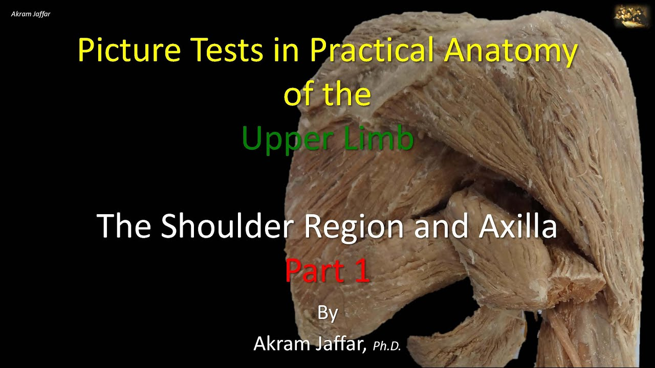 Picture tests in anatomy shoulder region and axilla 1 - YouTube