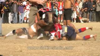 Run Piggy Run: Piglet catching competition in Nagaland