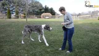 How To: Teach Your Dog To Come When Called (part 2)