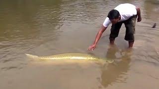 10 Ужасных Существ Реки Амазонка
