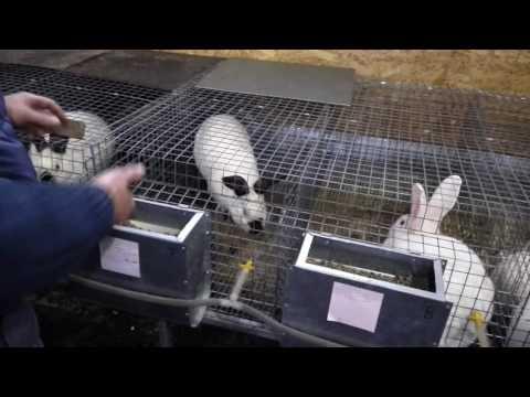 Вопрос: Почему у кроликов помет круглый?