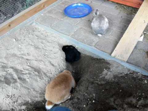 kaninchen beim buddeln im aussengehege youtube