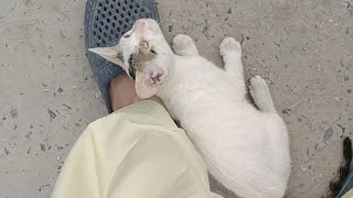 Rescued Cute Kitten Keeping Her Face On Dad's Shoes