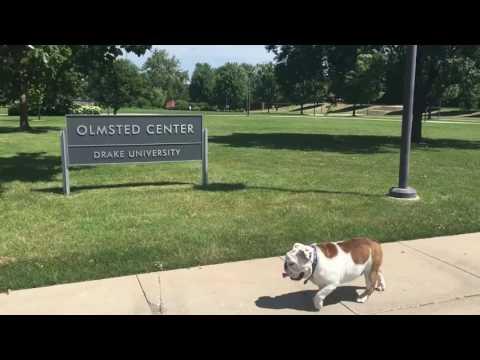(Bull)dog Days of Summer - Drake University