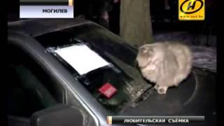 Котёнок провёл 4 дня в запертом автомобиле