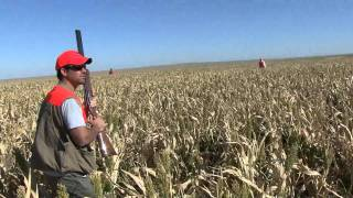South Dakota pheasant hunting with Major League Adventures Outfitters HD