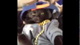 Приколы! Смешная, угарная подборка приколов с котами и кошками! Февраль 2014  Funny Pets Compilation