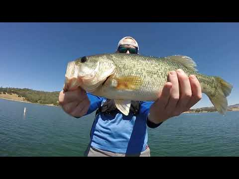 Lake Berryessa Bass Fishing Report - June/July 2019