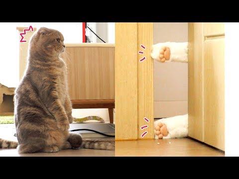 [몰래카메라] 방 안에 무서운 고양이가 있다!? - 가짜 발로 고양이 속이기
